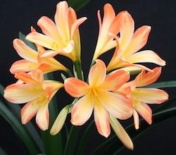 blossum-010.jpg